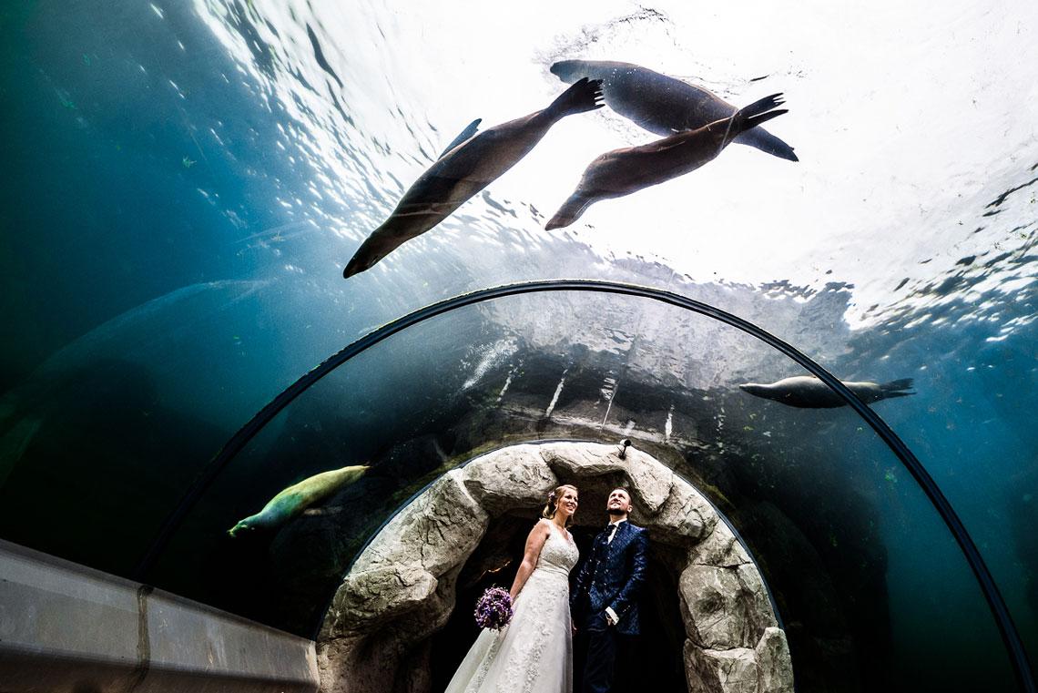 Hochzeit im Zoo Zoom in Gelsenkirchen