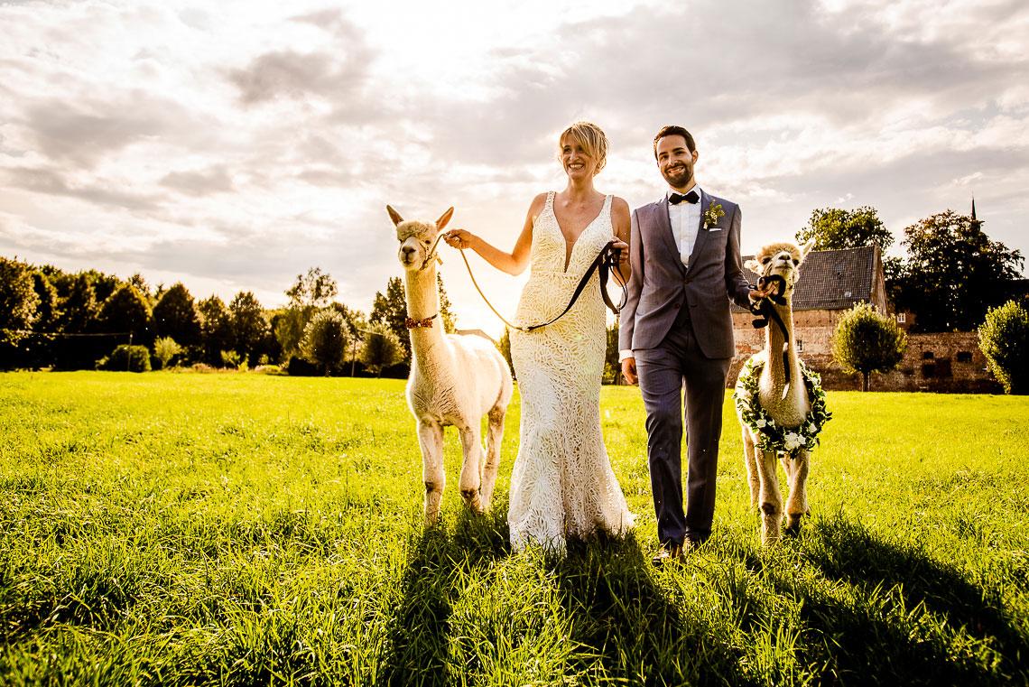 Brautpaar mit Alpakas